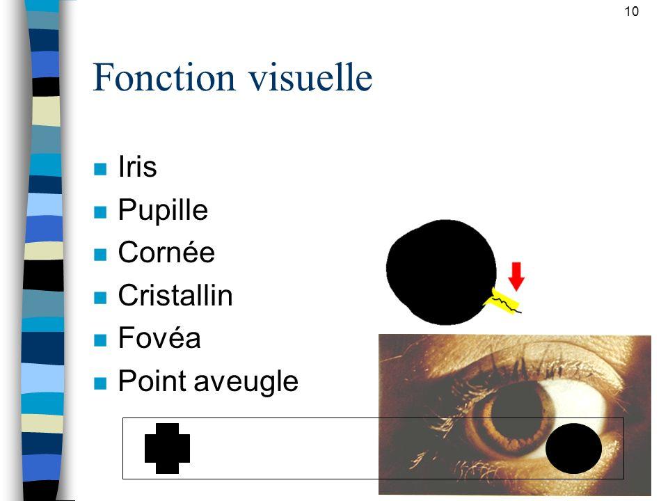 10 Fonction visuelle n Iris n Pupille n Cornée n Cristallin n Fovéa n Point aveugle