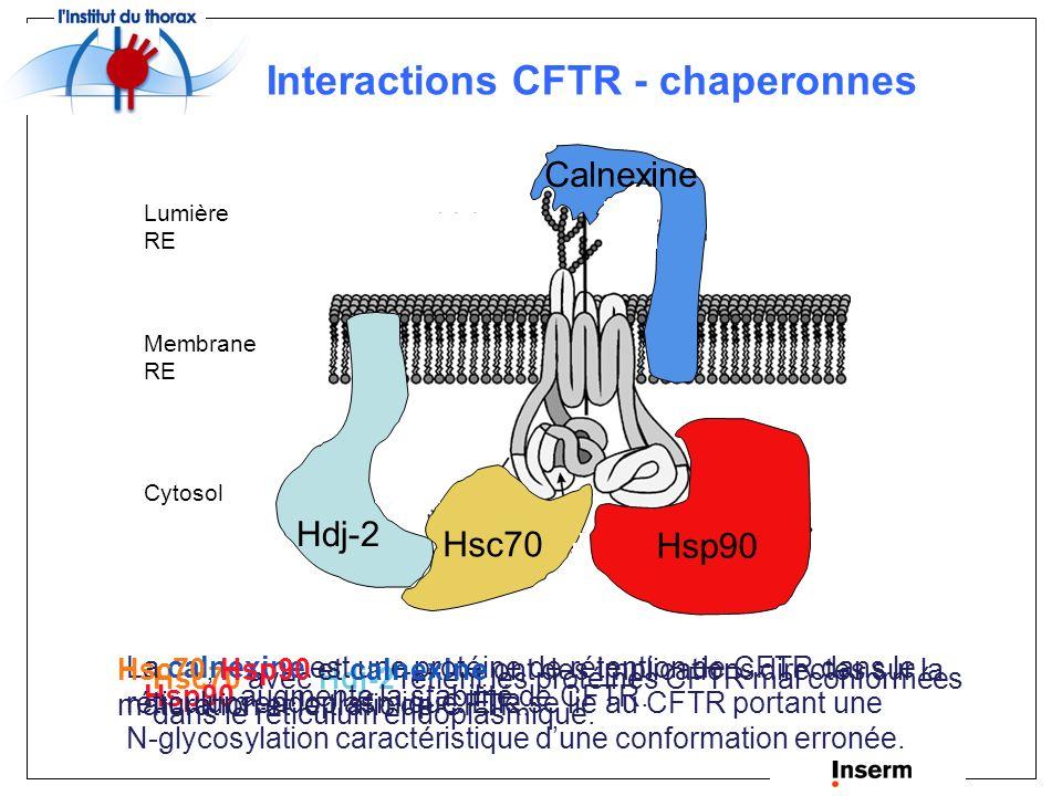 Suppression de l agrégation des protéines, réactivation des protéines dénaturées (Gething et Sambrook, 1992) Translocation nucléaire (Shi et Thomas, 1992) Élimination des manteaux de clathrine des vésicules (Ungewickell, 1985) Import mitochondrial (Terada et al., 1995) Ciblage de polypeptides vers les lysosomes pour la dégradation (Chiang et al., 1989; Terlecky et al., 1992) Dégradation d ARNm (Laroia et al., 1999) Régulation de la réponse suite à un choc thermique (Lindquist, 1986) Rôles des protéines chaperonnes Conformation correcte des protéines (Martin et Hartl, 1994; Hartl et Martin, 1995)