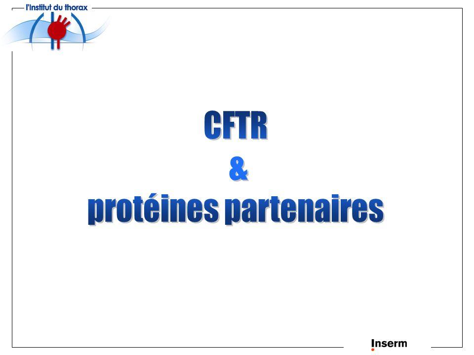 Interactions CFTR - chaperonnes Lumière RE Cytosol Membrane RE Hsc70 Hdj-2 Hsp90 Calnexine Hsc70 avec Hdj-2 retient les protéines CFTR mal conformées dans le réticulum endoplasmique.