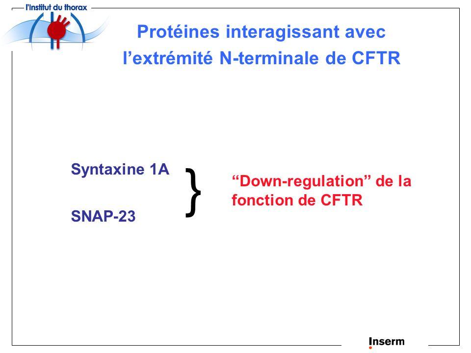 Interactions de CFTR avec différentes protéines partenaires Li and Naren, Pharmacol. Therap. (2005)