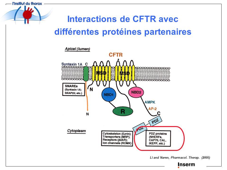 Protéines interagissant avec lextrémité N-terminale de CFTR Syntaxine 1A SNAP-23 } Down-regulation de la fonction de CFTR