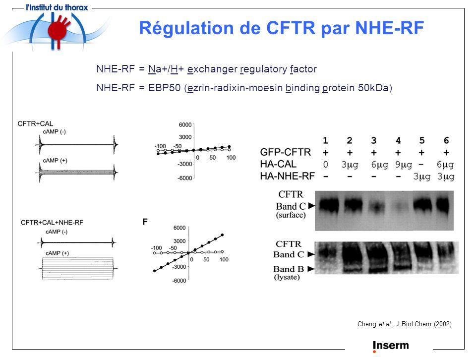 CAL = CFTR-associated ligand Cheng et al., J Biol Chem (2002) Régulation de la maturation de CFTR par CAL