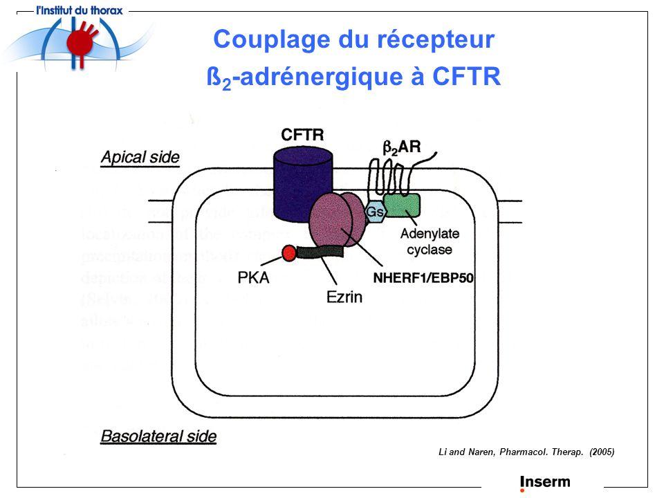 Formation de complexes macromoléculaires par interaction de protéines à domaines PDZ Protéines du cytosquelette : ezrine Transporteurs : MRP Récepteurs : ß 2 -adrénergique Canaux ioniques : ROMK
