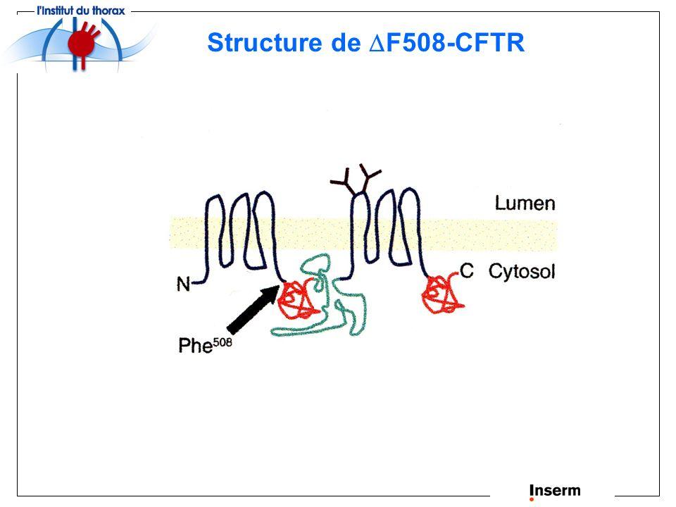 Mutation F508-CFTR La protéine F508-CFTR conserve sa fonction de canal chlorure lorsquelle est adressée à la membrane apicale.