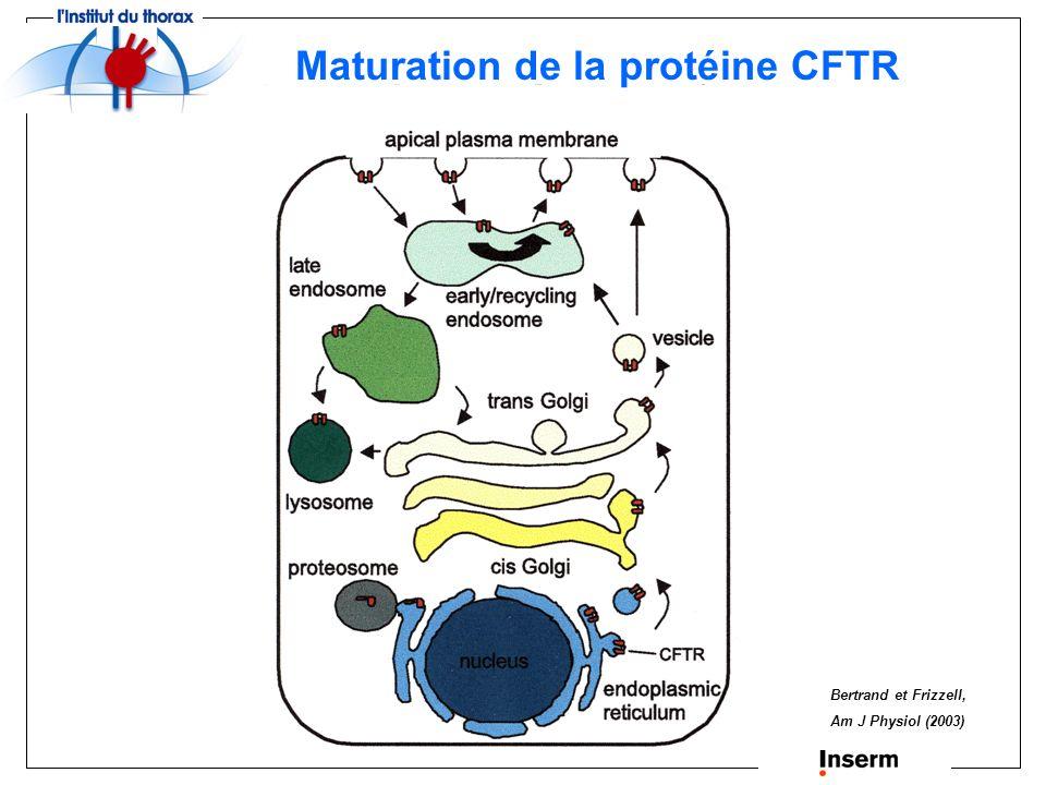 CFTR : un canal chlore