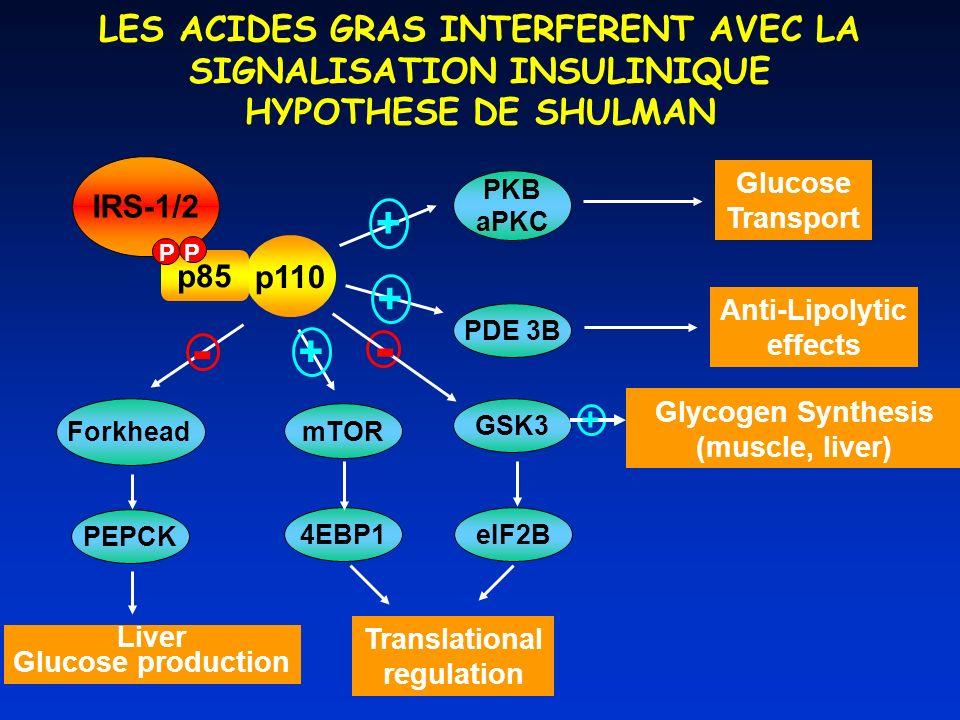 IRS-1/2 p110 p85 P P PDE 3B mTOR GSK3 Glucose Transport PKB aPKC Anti-Lipolytic effects 4EBP1 Translational regulation eIF2B Glycogen Synthesis (muscle, liver) Forkhead PEPCK - Liver Glucose production - + + + + LES ACIDES GRAS INTERFERENT AVEC LA SIGNALISATION INSULINIQUE HYPOTHESE DE SHULMAN
