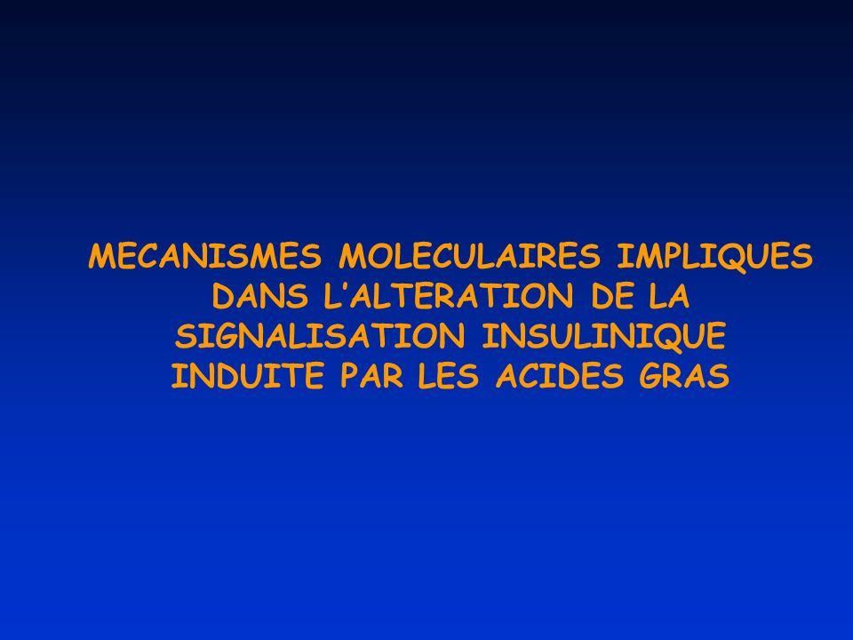 MECANISMES MOLECULAIRES IMPLIQUES DANS LALTERATION DE LA SIGNALISATION INSULINIQUE INDUITE PAR LES ACIDES GRAS