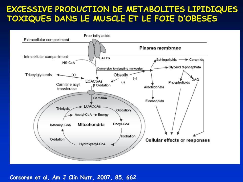 Corcoran et al, Am J Clin Nutr, 2007, 85, 662 EXCESSIVE PRODUCTION DE METABOLITES LIPIDIQUES TOXIQUES DANS LE MUSCLE ET LE FOIE DOBESES