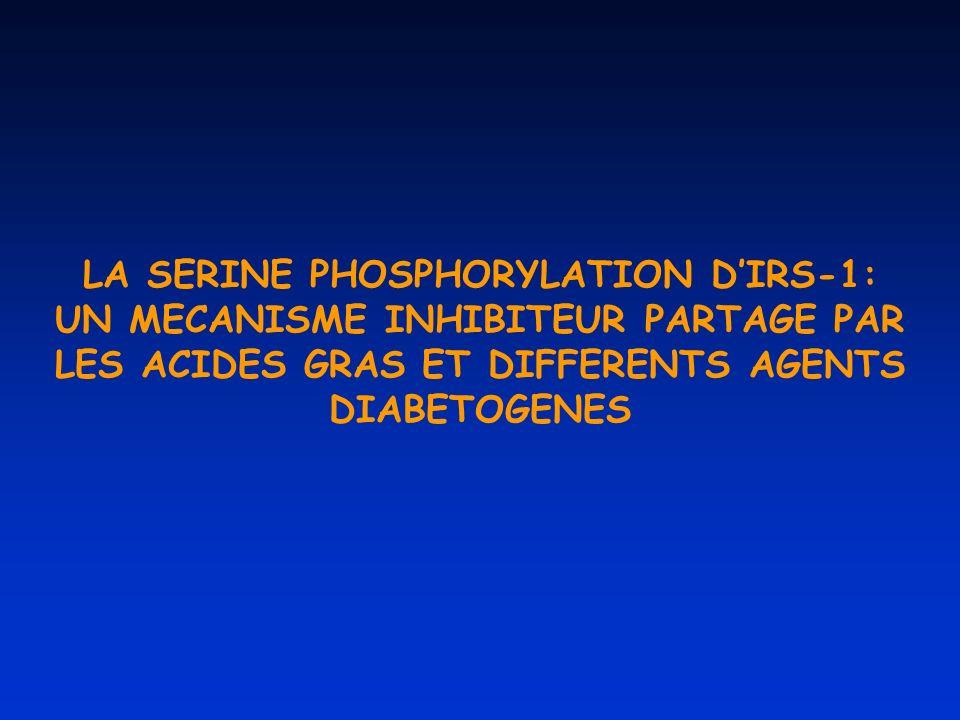 LA SERINE PHOSPHORYLATION DIRS-1: UN MECANISME INHIBITEUR PARTAGE PAR LES ACIDES GRAS ET DIFFERENTS AGENTS DIABETOGENES