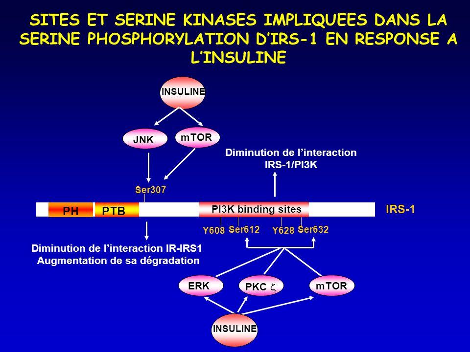 Ser307 Ser612Ser632 mTOR INSULINE PH PTB Y608Y628 PI3K binding sites IRS-1 JNK mTOR ERK INSULINE SITES ET SERINE KINASES IMPLIQUEES DANS LA SERINE PHOSPHORYLATION DIRS-1 EN RESPONSE A LINSULINE PKC Diminution de linteraction IR-IRS1 Augmentation de sa dégradation Diminution de linteraction IRS-1/PI3K
