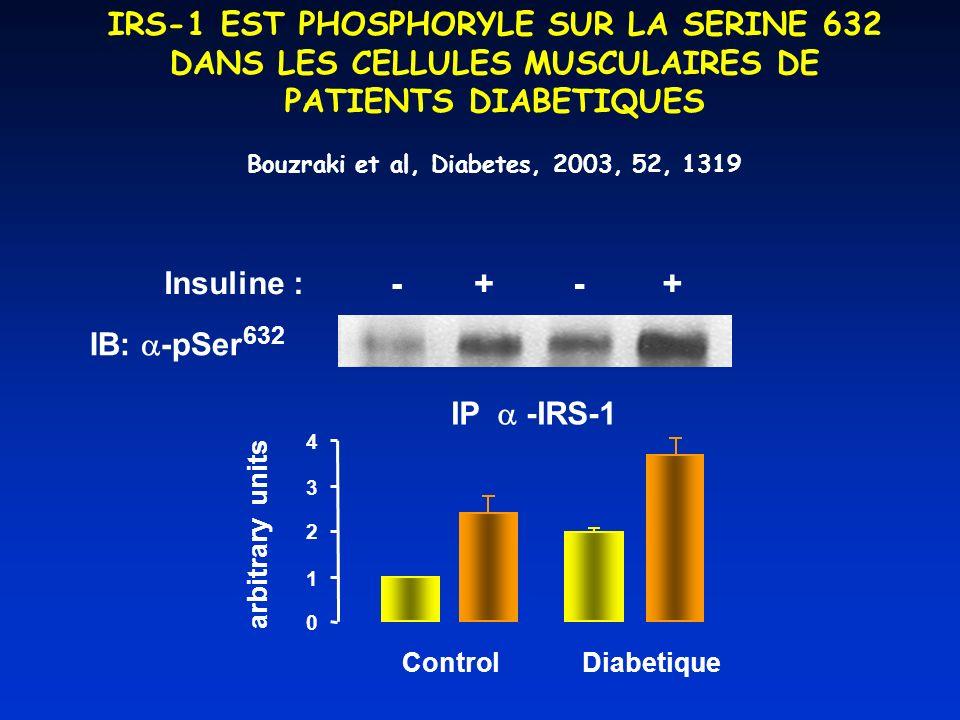 IRS-1 EST PHOSPHORYLE SUR LA SERINE 632 DANS LES CELLULES MUSCULAIRES DE PATIENTS DIABETIQUES arbitrary units 0 1 2 3 4 ControlDiabetique Insuline : -+-+ IB: -pSer 632 IP -IRS-1 Bouzraki et al, Diabetes, 2003, 52, 1319