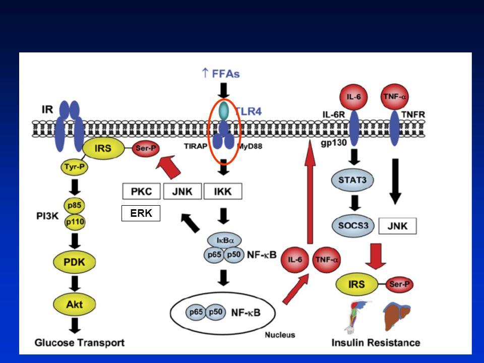 LINVALIDATION DES TOLL-LIKE RECEPTEURS 4 NE MODIFIE PAS LA PRISE DE POIDS Poggi et al, Diabetologia, 2007, 50, 1267 WT TLR4 -/- WT