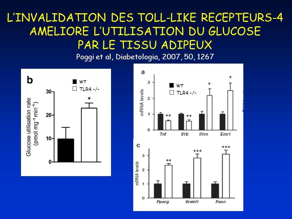 LINVALIDATION DES TOLL-LIKE RECEPTEURS-4 AMELIORE LUTILISATION DU GLUCOSE PAR LE TISSU ADIPEUX Poggi et al, Diabetologia, 2007, 50, 1267 TLR4 -/- WT T