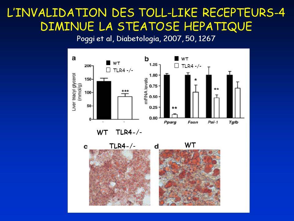 LINVALIDATION DES TOLL-LIKE RECEPTEURS-4 DIMINUE LA STEATOSE HEPATIQUE Poggi et al, Diabetologia, 2007, 50, 1267 WT TLR4-/- WT TLR4-/- WT TLR4 -/- WT