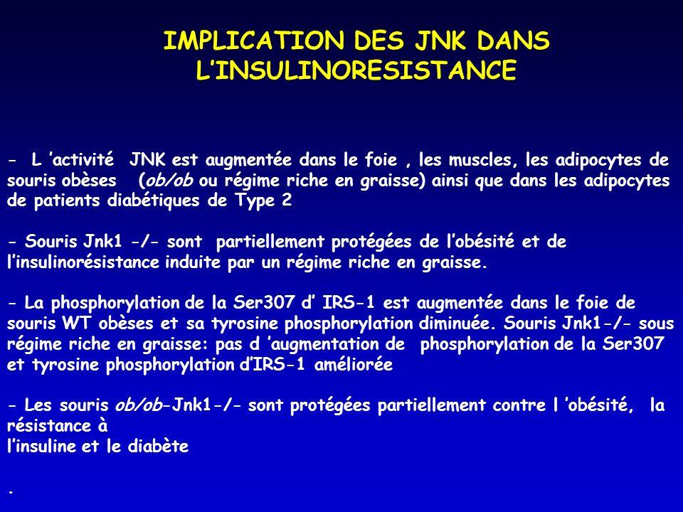 - L activité JNK est augmentée dans le foie, les muscles, les adipocytes de souris obèses (ob/ob ou régime riche en graisse) ainsi que dans les adipocytes de patients diabétiques de Type 2 - Souris Jnk1 -/- sont partiellement protégées de lobésité et de linsulinorésistance induite par un régime riche en graisse.