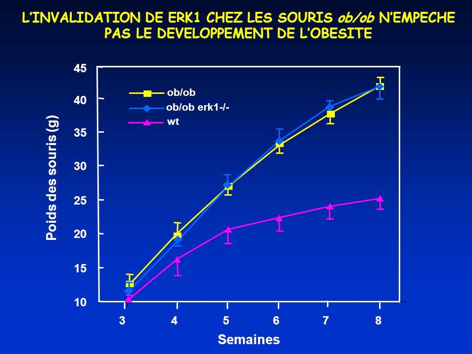 LINVALIDATION DE ERK1 CHEZ LES SOURIS ob/ob NEMPECHE PAS LE DEVELOPPEMENT DE LOBESITE 45 10 15 20 25 30 35 345678 Semaines Poids des souris (g) ob/ob