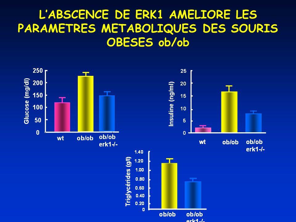 LABSCENCE DE ERK1 AMELIORE LES PARAMETRES METABOLIQUES DES SOURIS OBESES ob/ob