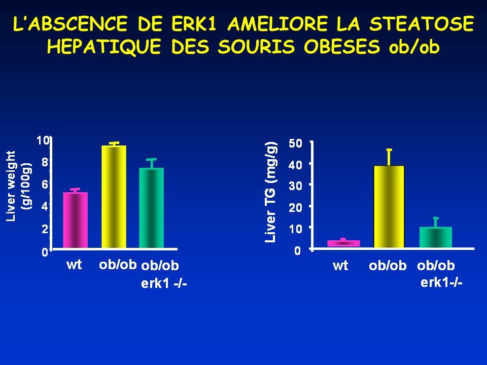 LABSCENCE DE ERK1 AMELIORE LA STEATOSE HEPATIQUE DES SOURIS OBESES ob/ob