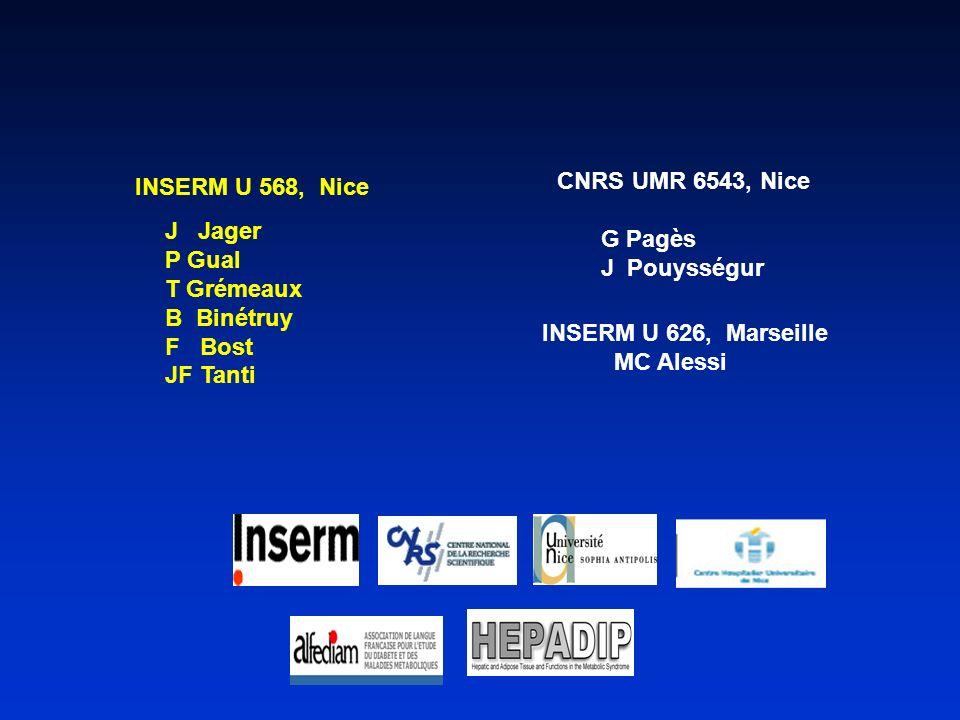 INSERM U 568, Nice J Jager P Gual T Grémeaux B Binétruy F Bost JF Tanti G Pagès J Pouysségur CNRS UMR 6543, Nice INSERM U 626, Marseille MC Alessi