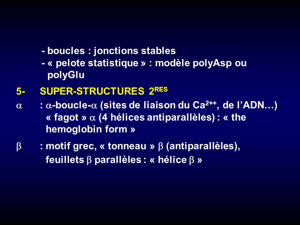 5-SUPER-STRUCTURES 2 RES : -boucle- (sites de liaison du Ca 2++, de lADN…) « fagot » (4 hélices antiparallèles) : « the hemoglobin form » :motif grec,