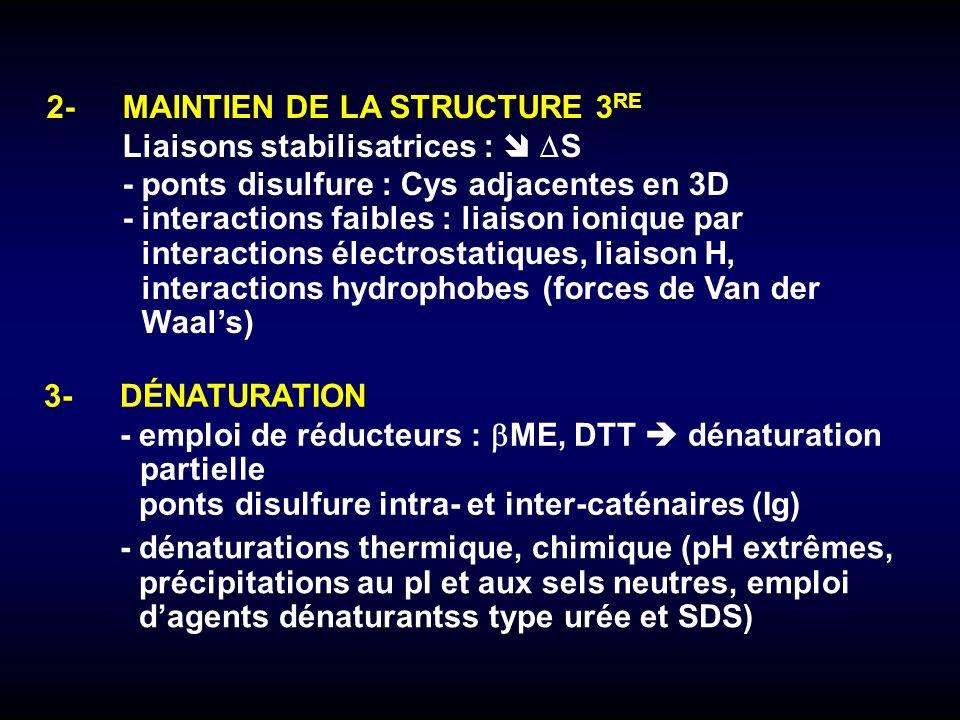 3-DÉNATURATION -emploi de réducteurs : ME, DTT dénaturation partielle ponts disulfure intra- et inter-caténaires (Ig) -dénaturations thermique, chimiq