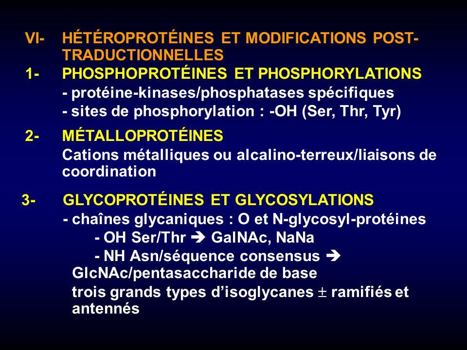 VI-HÉTÉROPROTÉINES ET MODIFICATIONS POST- TRADUCTIONNELLES 1-PHOSPHOPROTÉINES ET PHOSPHORYLATIONS -protéine-kinases/phosphatases spécifiques -sites de