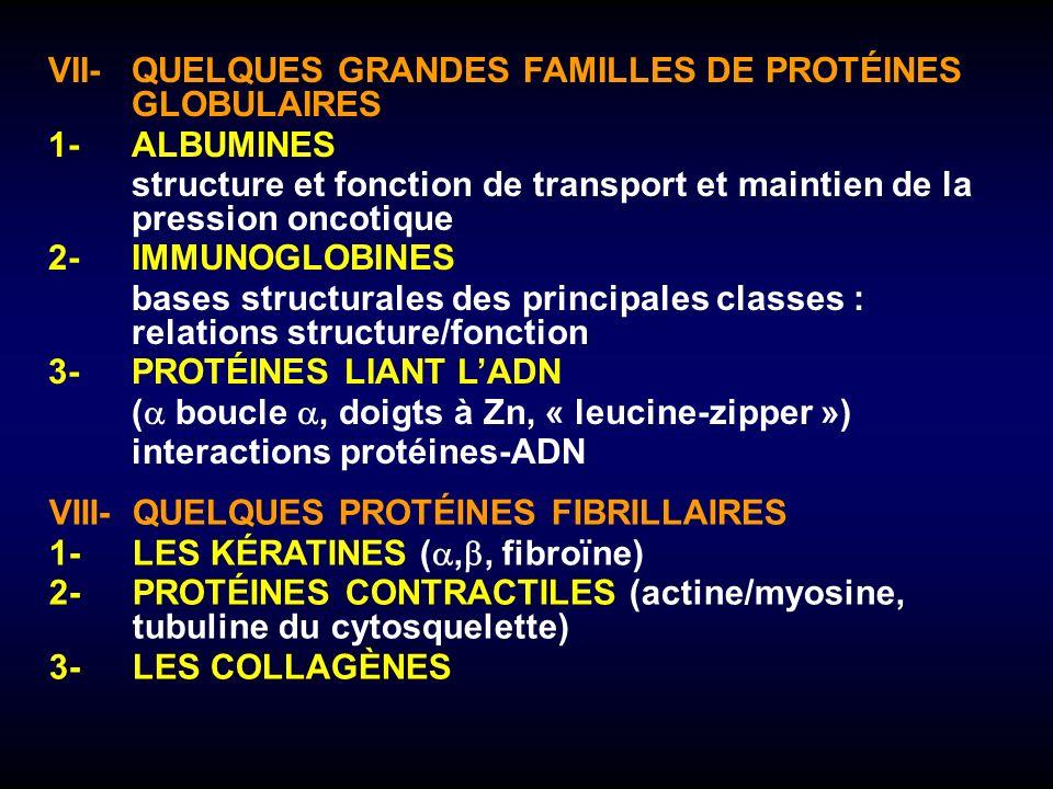 VII-QUELQUES GRANDES FAMILLES DE PROTÉINES GLOBULAIRES 1-ALBUMINES structure et fonction de transport et maintien de la pression oncotique 2-IMMUNOGLO