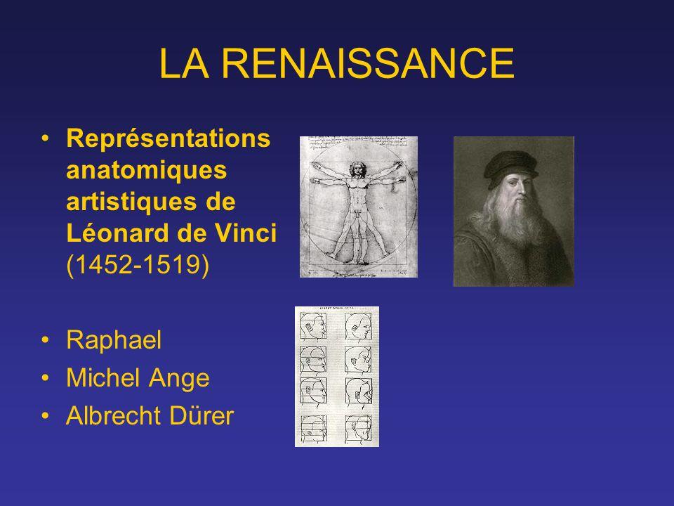 LA RENAISSANCE Représentations anatomiques artistiques de Léonard de Vinci (1452-1519) Raphael Michel Ange Albrecht Dürer