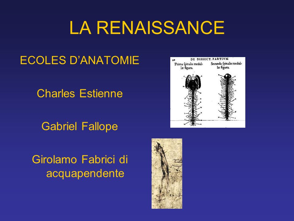 LA RENAISSANCE ECOLES DANATOMIE Charles Estienne Gabriel Fallope Girolamo Fabrici di acquapendente