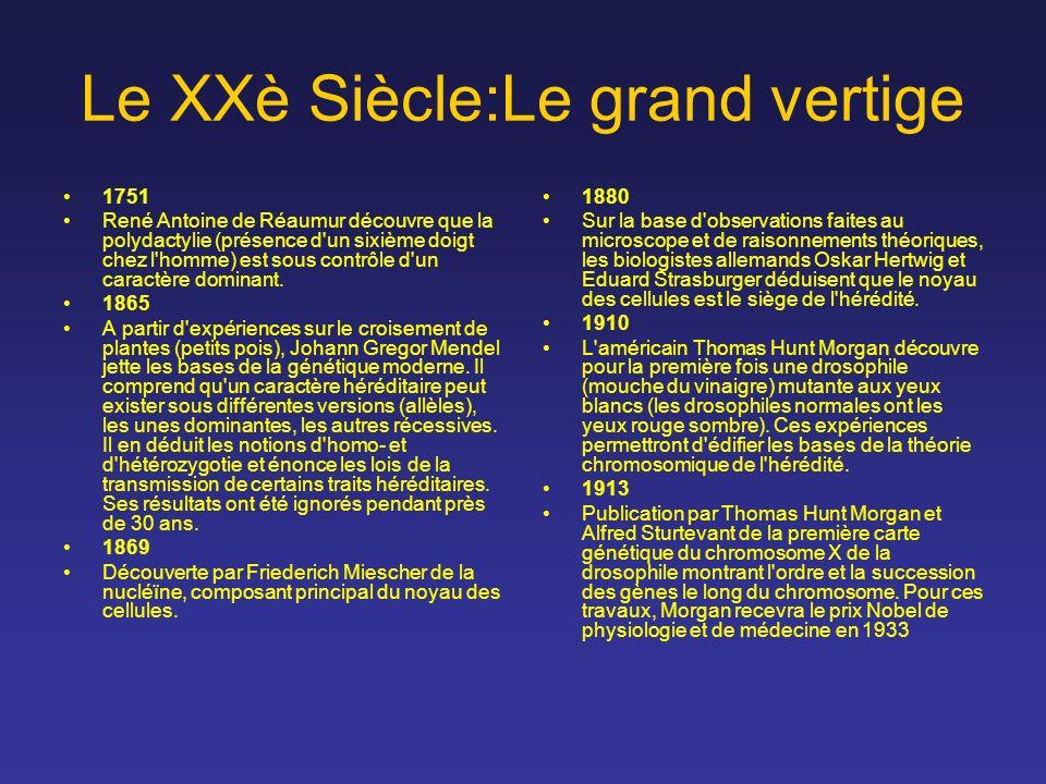 Le XXè Siècle:Le grand vertige 1751 René Antoine de Réaumur découvre que la polydactylie (présence d'un sixième doigt chez l'homme) est sous contrôle