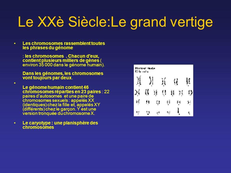 Le XXè Siècle:Le grand vertige Les chromosomes rassemblent toutes les phrases du génome : les chromosomes. Chacun d'eux, contient plusieurs milliers d