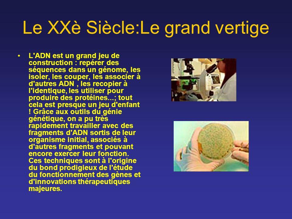 Le XXè Siècle:Le grand vertige L'ADN est un grand jeu de construction : repérer des séquences dans un génome, les isoler, les couper, les associer à d