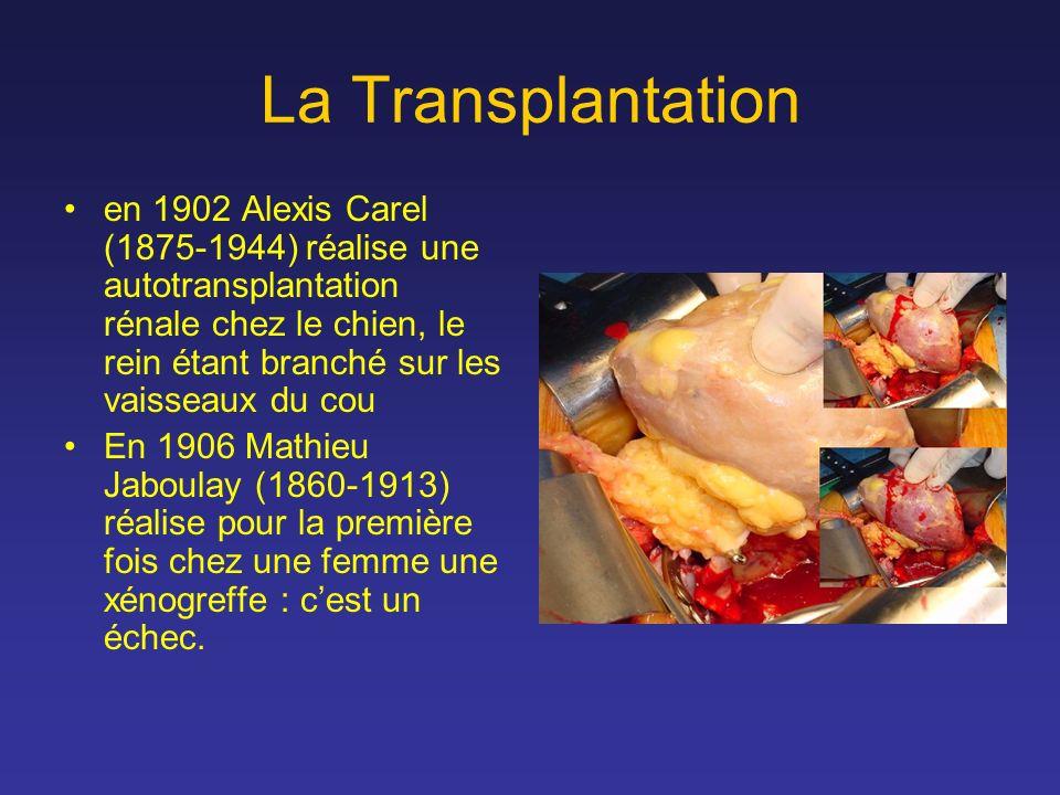 La Transplantation en 1902 Alexis Carel (1875-1944) réalise une autotransplantation rénale chez le chien, le rein étant branché sur les vaisseaux du c