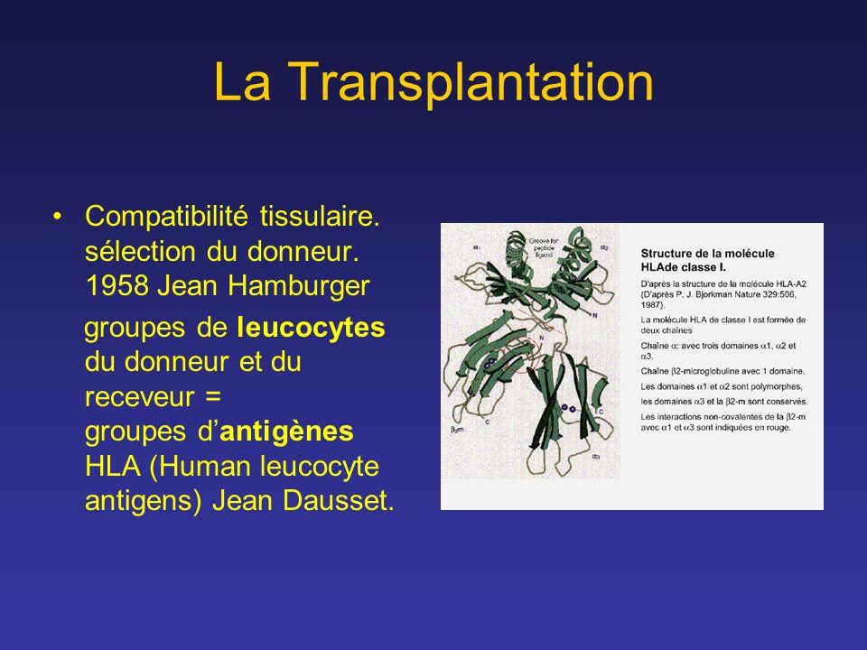 La Transplantation Compatibilité tissulaire. sélection du donneur. 1958 Jean Hamburger groupes de leucocytes du donneur et du receveur = groupes danti