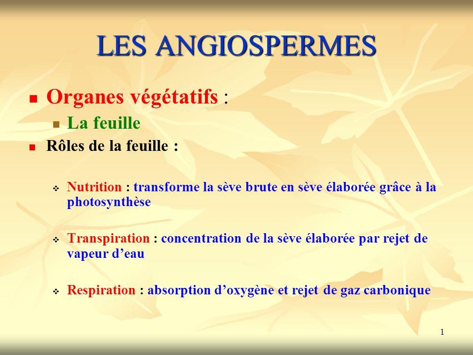 1 LES ANGIOSPERMES Organes végétatifs : La feuille Rôles de la feuille : Nutrition : transforme la sève brute en sève élaborée grâce à la photosynthès