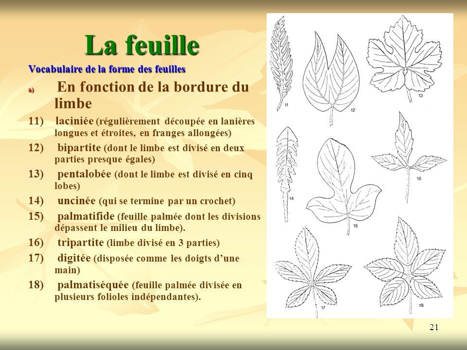 21 La feuille Vocabulaire de la forme des feuilles a) a) En fonction de la bordure du limbe 11) laciniée (régulièrement découpée en lanières longues e