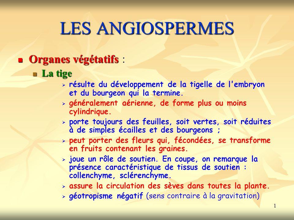 1 LES ANGIOSPERMES Organes végétatifs : La tige résulte du développement de la tigelle de l'embryon et du bourgeon qui la termine. généralement aérien