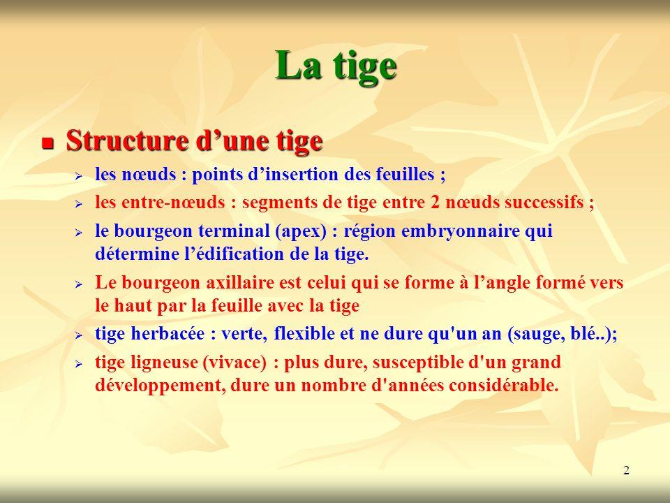 2 La tige Structure dune tige les nœuds : points dinsertion des feuilles ; les entre-nœuds : segments de tige entre 2 nœuds successifs ; le bourgeon t