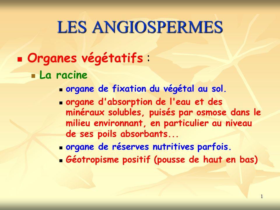 1 LES ANGIOSPERMES Organes végétatifs : La racine organe de fixation du végétal au sol.