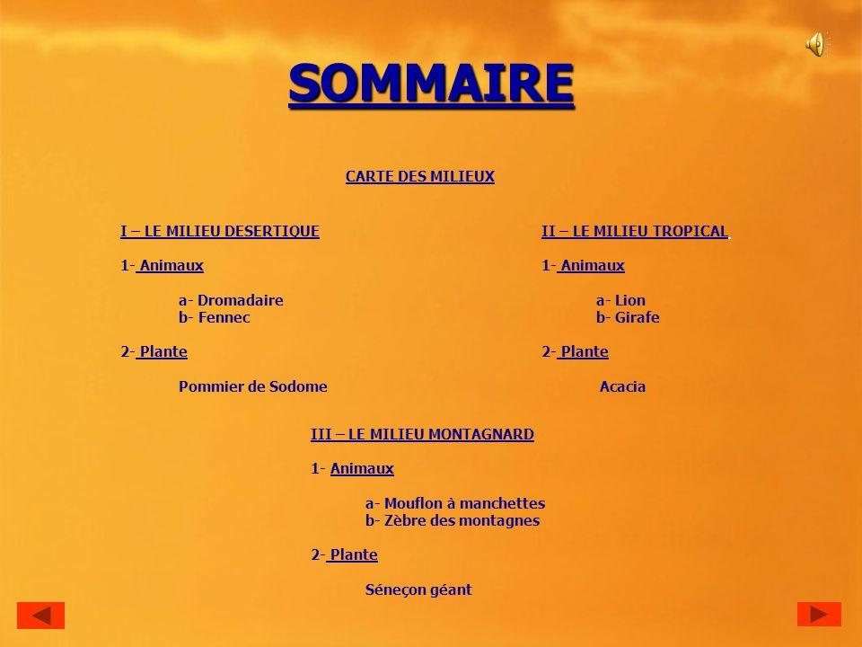 SOMMAIRE CARTE DES MILIEUX II – LE MILIEU TROPICAL 1- Animaux a- Lion b- Girafe 2- Plante Acacia III – LE MILIEU MONTAGNARD 1- Animaux a- Mouflon à manchettes b- Zèbre des montagnes 2- Plante Séneçon géant I – LE MILIEU DESERTIQUE 1- Animaux a- Dromadaire b- Fennec 2- Plante Pommier de Sodome