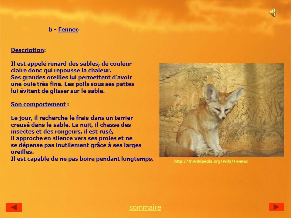 b - Fennec Description: Il est appelé renard des sables, de couleur claire donc qui repousse la chaleur.