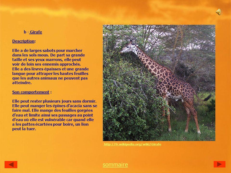 b - Girafe Description: Elle a de larges sabots pour marcher dans les sols mous.