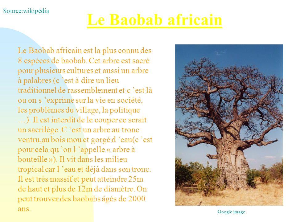 Le Baobab africain Le Baobab africain est la plus connu des 8 espèces de baobab. Cet arbre est sacré pour plusieurs cultures et aussi un arbre à palab