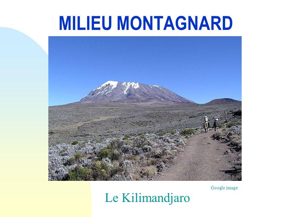 MILIEU MONTAGNARD Le Kilimandjaro Google image