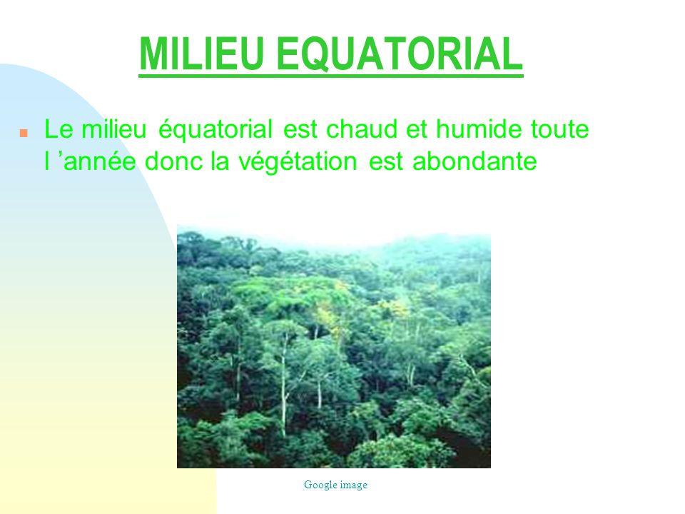 MILIEU EQUATORIAL n Le milieu équatorial est chaud et humide toute l année donc la végétation est abondante Google image