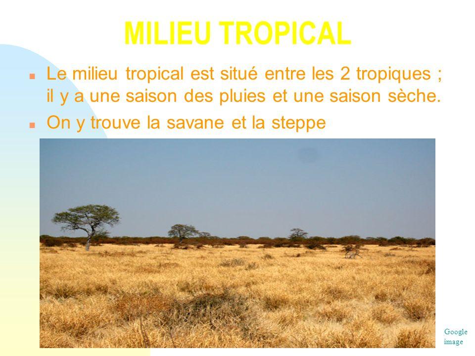 MILIEU TROPICAL n Le milieu tropical est situé entre les 2 tropiques ; il y a une saison des pluies et une saison sèche. n On y trouve la savane et la
