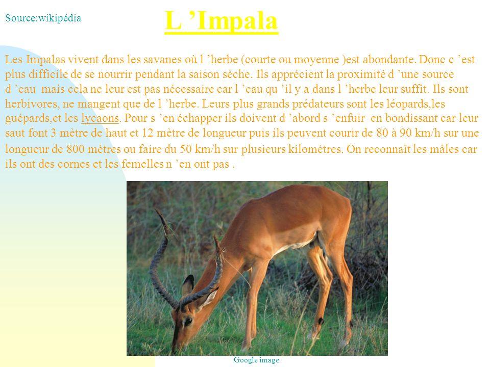 L Impala Les Impalas vivent dans les savanes où l herbe (courte ou moyenne )est abondante. Donc c est plus difficile de se nourrir pendant la saison s
