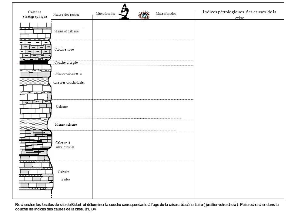 Nature des roches Marne et calcaire Calcaire rosé Couche dargile Marno-calcaires à Calcaire Marno-calcaire Calcaire à silex rubanés Calcaire à silex MacrofossilesMicrofossiles Rechercher les fossiles du site de Bidart et déterminer la couche correspondante à lage de la crise crétacé tertiaire ( justifier votre choix ).