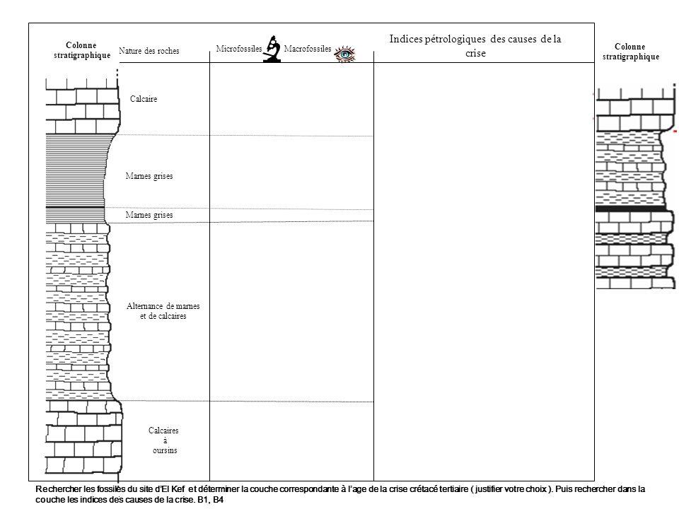 Nature des roches MacrofossilesMicrofossiles Colonne stratigraphique Colonne stratigraphique Calcaire Marnes grises Alternance de marnes et de calcaires Calcaires à oursins Globotruncanidae GlobigerinidaeGloborotalia Inoceramus Rudistes Nummulite Indices pétrologiques des causes de la crise Présence diridium, de quartz choqués, de suie, de magnétites nickélifères Stegaster Rechercher les fossiles du site dEl Kef et déterminer la couche correspondante à lage de la crise crétacé tertiaire ( justifier votre choix ).