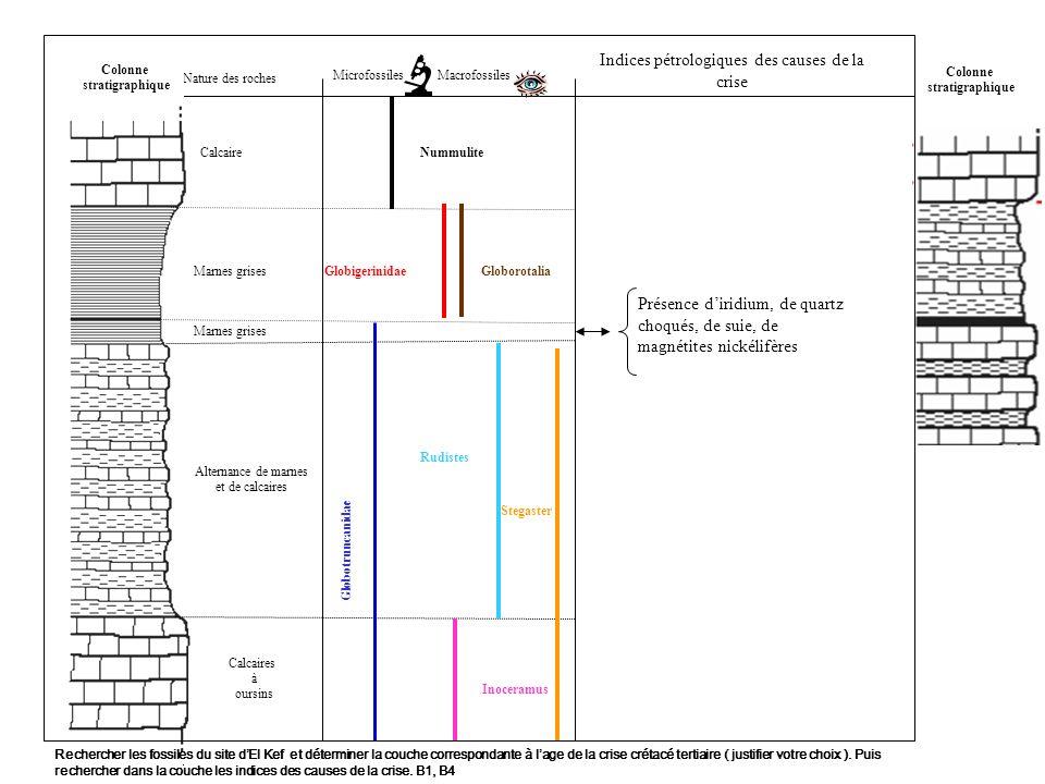 Correspondance de la microfaune et de la macrofaune Même époque Maastrichien Correspondance de la microfaune Danien - 65 Ma